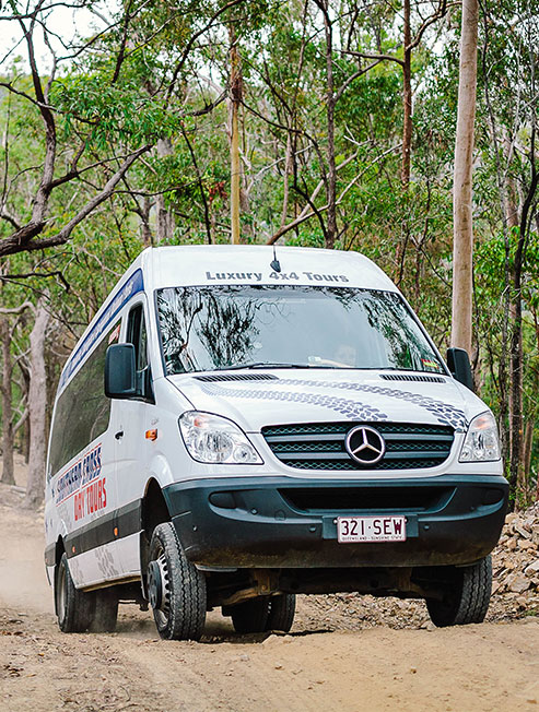 Scenic Hinterland Day Tours - 4WD Bus in Rainforest