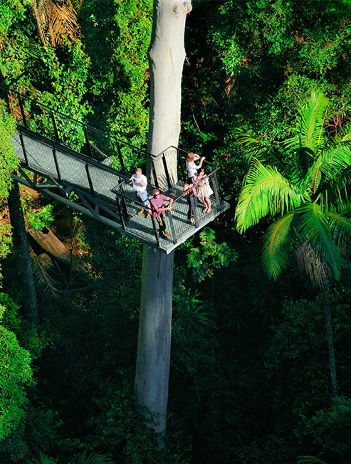 Rainforest Skywalk Gold Coast