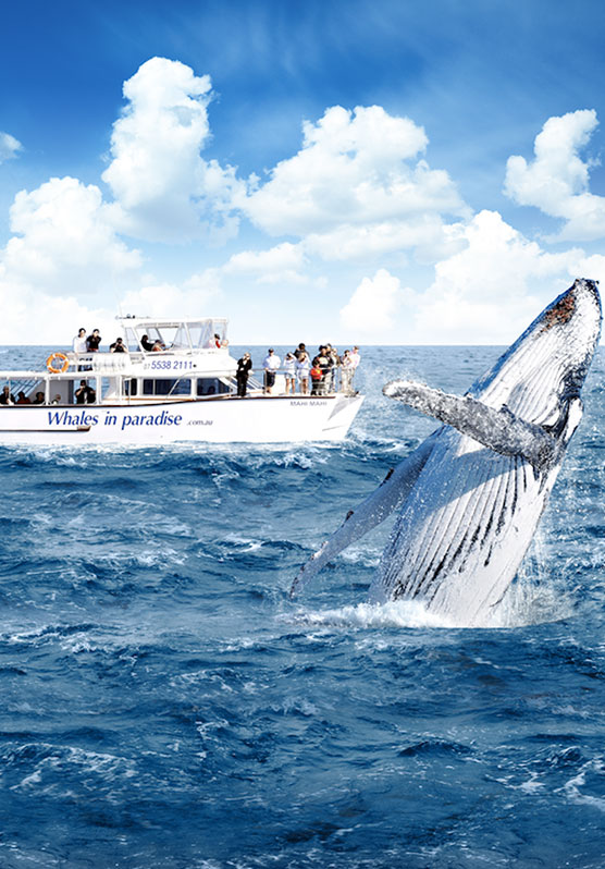 Whale jumping out of ocean